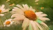 art numerique fleurs fleurs printemps : Fleurs printanières