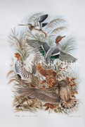 tableau animaux chasse chasseur animaux gibier : Rêve de chasse