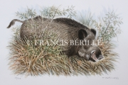 tableau animaux animaux chasse sanglier gibier : Solitaire
