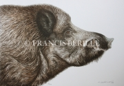 tableau animaux sanglier animaux chasse gibier : Grand sanglier