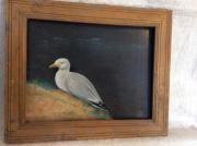 tableau animaux oiseau marin bretagne : La mouette