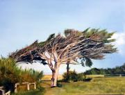 tableau paysages pin couche par le ve oleron pointe de chassiron : L'arbre penché