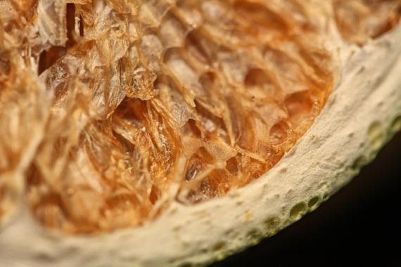 PHOTO macro photo fruit fruit intérieur fruit Nature morte  - Entraille du fruit