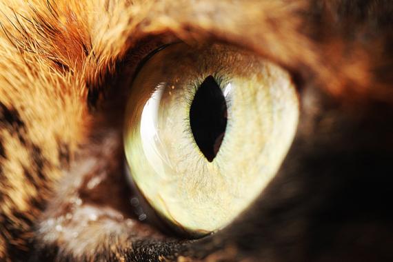 PHOTO chat oeil de chat oeil de chat macro p Animaux  - Eye of my cat