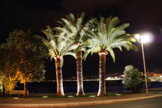 PHOTO Nice Nice de nuit photo nocturne  - Nice, de nuit.