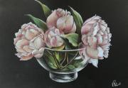 dessin fleurs : Pivoine