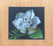 dessin fleurs : La rose
