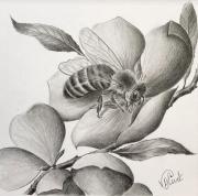 dessin animaux abeille dessin noir et blanc crayon : Gwenan Du