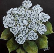 dessin fleurs : Hydrangea