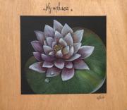 dessin fleurs : Nympheae