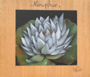 dessin fleurs : Nénuphar
