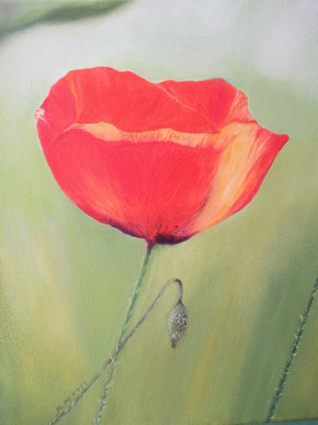 TABLEAU PEINTURE Fleurs Peinture a l'huile  - Joli coquelicot