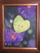 tableau animaux : Papillon fluo
