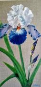 tableau fleurs : Iris solitaire