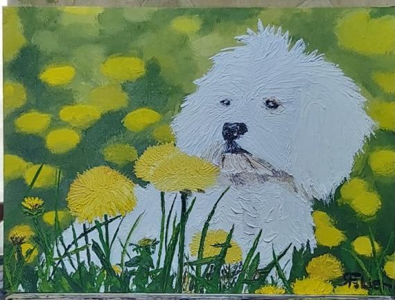 TABLEAU PEINTURE chien bichon pisenlit prairie Animaux Peinture a l'huile  - Bichon