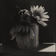 photo fleurs tournesol : c l'air et obscur