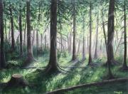 tableau paysages foret forest lights : Forest lights