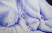 tableau animaux chat blanc animaux violet : Sieste persane