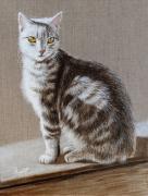 tableau animaux chat animaux tigre lumiere : Dans la lumière