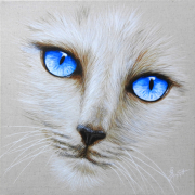 tableau animaux chat yeux bleux animaux : Tendre regard