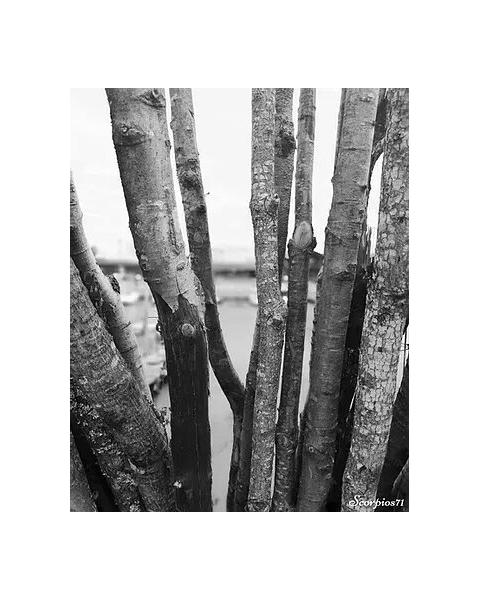 PHOTO Paysages  - Les Landes