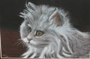 tableau animaux : Chat blanc