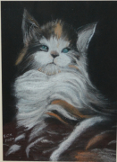tableau animaux : Chaton tricolore
