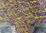 tableau paysages : Champ de mavande