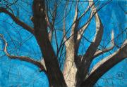 dessin paysages chene ardennes dessin crayons : Le chêne, roi de la forêt ardennaise.