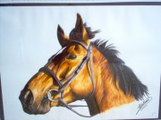 dessin animaux cheval tete filet realisme : tête de cheval