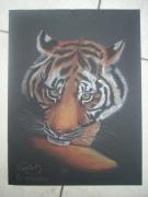 dessin animaux tigre felin portrait : tigre