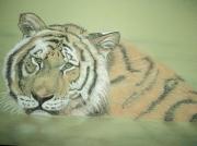 dessin animaux tigre eau pastel animaux : tigre dans l'eau 1