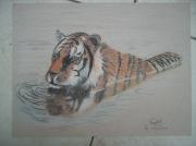 dessin animaux tigre eau felin reflet : tigre dans l'eau