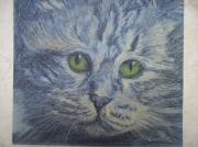 dessin animaux chat felin portrait : gros plan