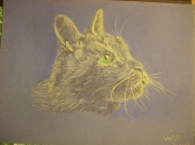 dessin animaux chat portrait felin : chat