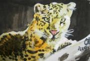 dessin : leopard