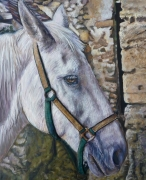 tableau animaux cheval blanc : cheval blanc