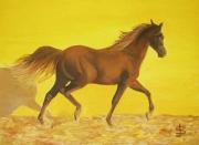 tableau animaux pur sang etalon cheval equitation : Pur sang