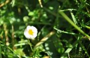 photo fleurs fleur vert jaune goutte : goutte d'eau