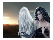 les fées divin'