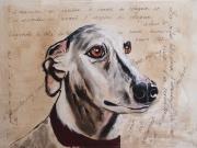 tableau animaux chien levrier mots regard : Ossy