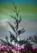 art numerique paysages arbres couleur photo peinture : transport noël