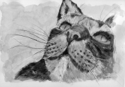 tableau animaux chat animal : cherrry
