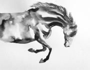 dessin animaux cheval mouvement joie noir : la joie