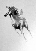 dessin animaux galop cheval encre gris : cheval
