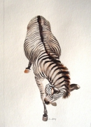 dessin animaux palmyre zebre animal sauvage : zèbre se grattant