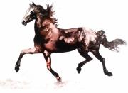 dessin animaux mouvement cheval allure encre : le trot