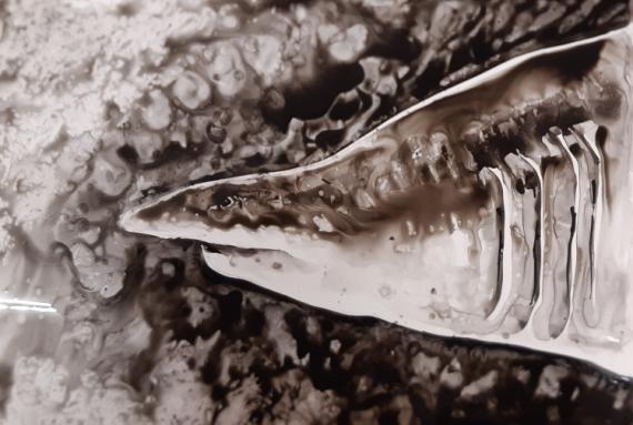 TABLEAU PEINTURE requin yupo océan nature Animaux Encre de Chine  - big shark