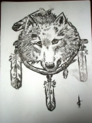 dessin animaux loup indien : LOUP