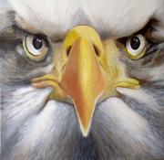 tableau animaux aigle acrylique portrait : Regard de bête N° 2